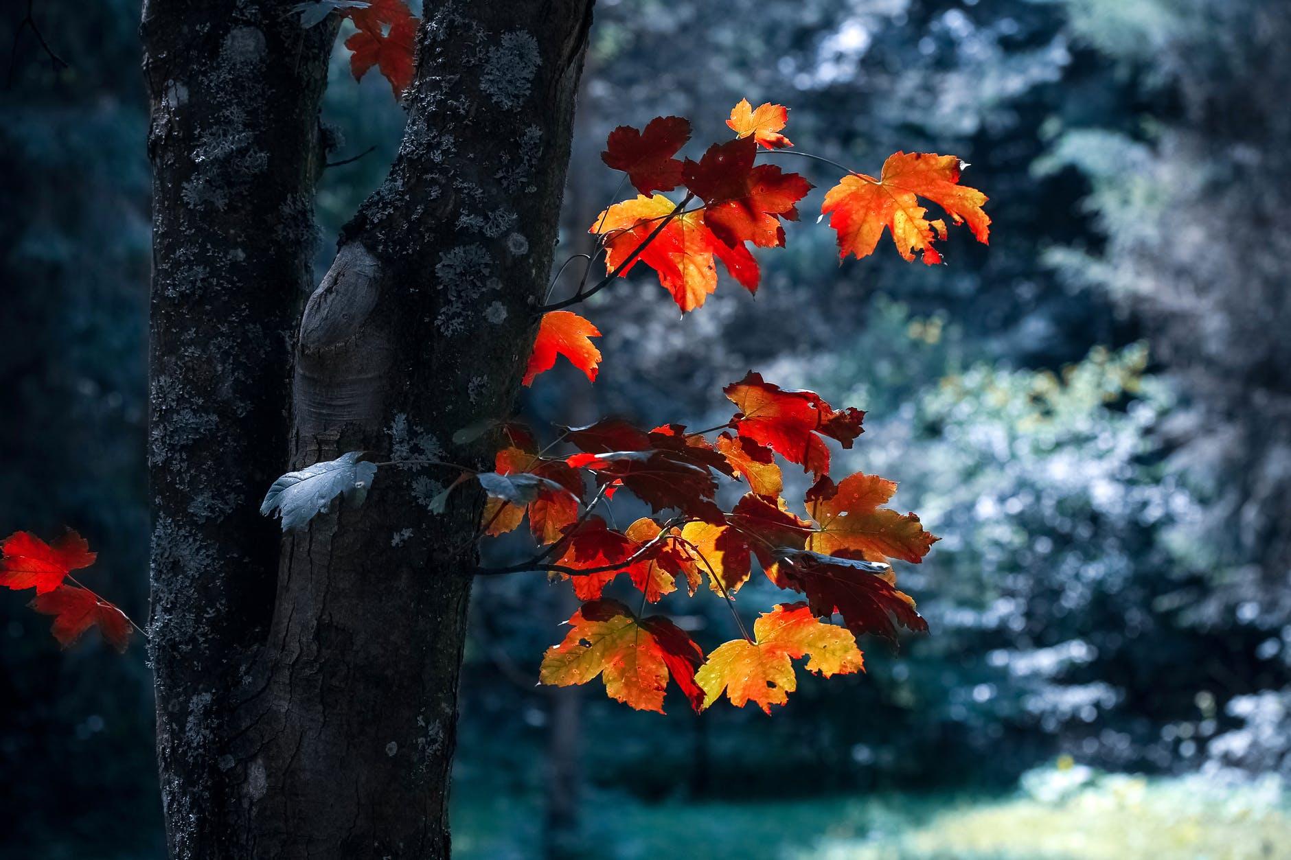 autumn autumn leaves blur close up