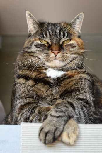 adorable angry animal animal portrait